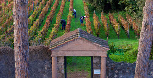 Mastroberardino Vineyards